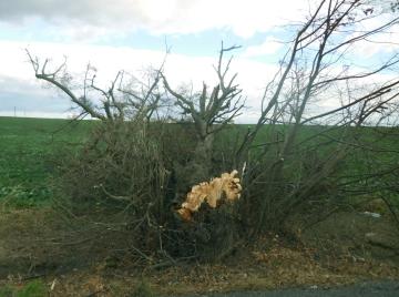 zlom-kmene-znalecka-cinnost-ars-viridis třebíč, jihlava, třebíčsko znalecká činnost stromy