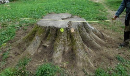 Likvidace pařezů a kořenů