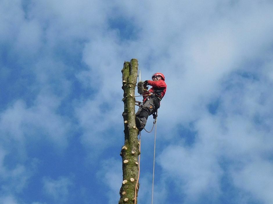 Příprava na postupné kácení stromů na hřbitově v Pacově.